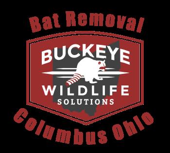 Bat Removal Columbus Ohio by Buckeye Wildlife Solutions