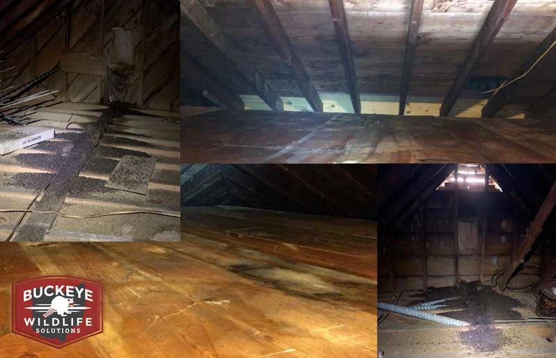 Attic Cleanup And Sanitation collage photo of attic before and after